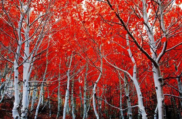 30 живописних пейзажів, які захоплюють та надихають. Найкращі пейзажі зі всього Світу (6)