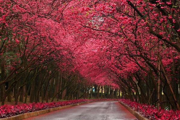 30 живописних пейзажів, які захоплюють та надихають. Найкращі пейзажі зі всього Світу (3)