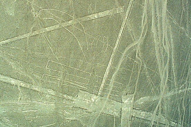 Лінії Наска (4)