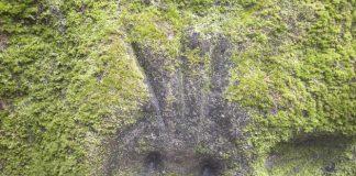 Національний природний парк Тайрона (10)