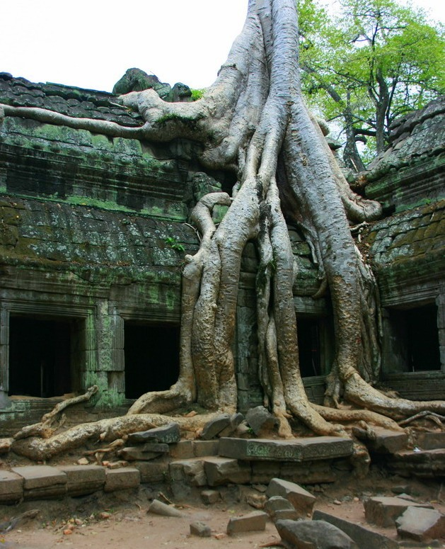 Ангкор (4)