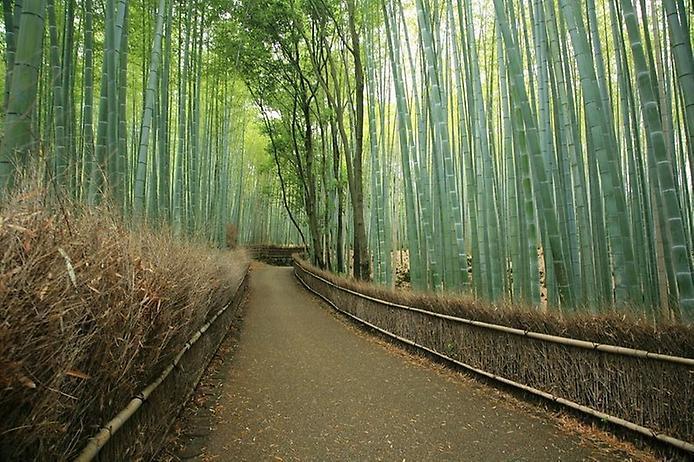 Бамбуковий ліс Саган (9)