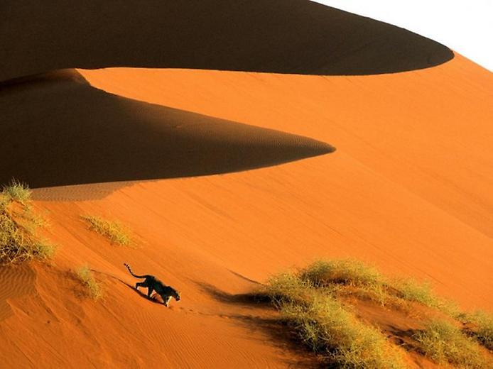 Плато Соссусфлей в пустелі Наміб (5)