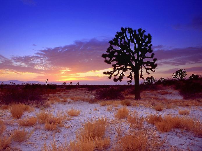 Пустеля Мохаве (10)