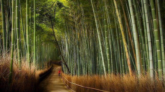 бамбукова стежка Саган