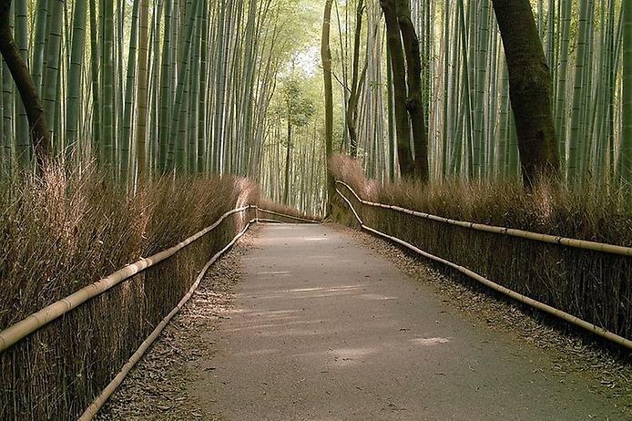Бамбуковий ліс Саган (7)