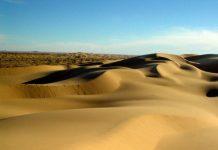 Пустеля Сонора (6)