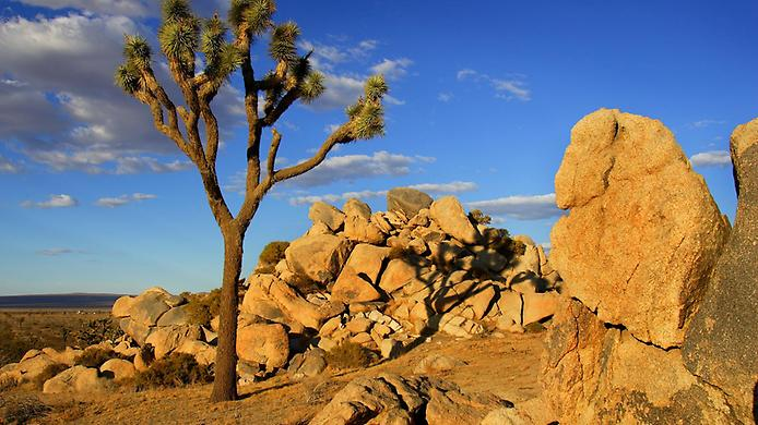 Пустеля Мохаве (7)