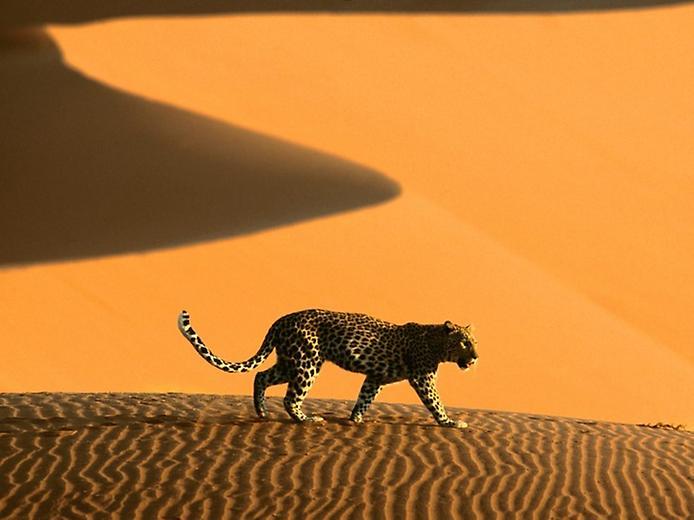 Плато Соссусфлей в пустелі Наміб (3)
