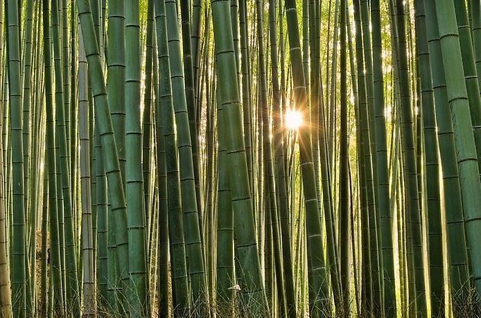 Бамбуковий ліс Саган (4)