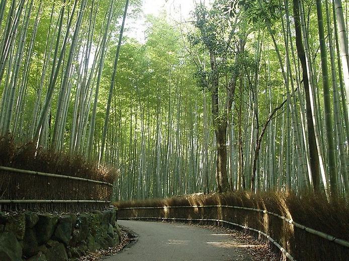 Бамбуковий ліс Саган (3)