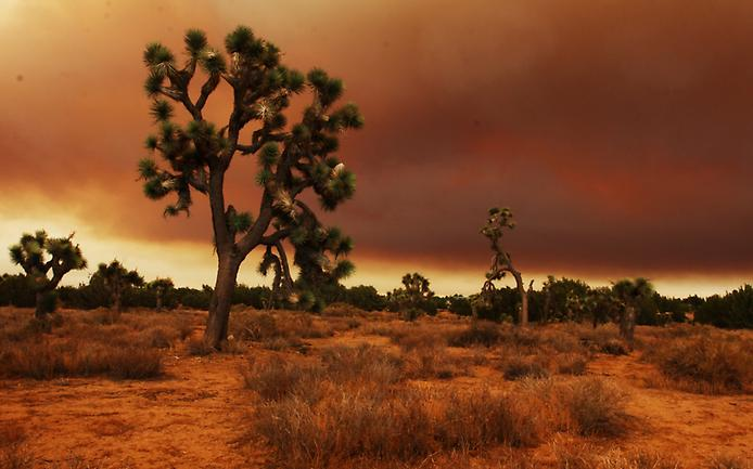 Пустеля Мохаве (2)