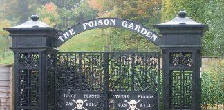 Сад отруйних рослин Альнвік (1)