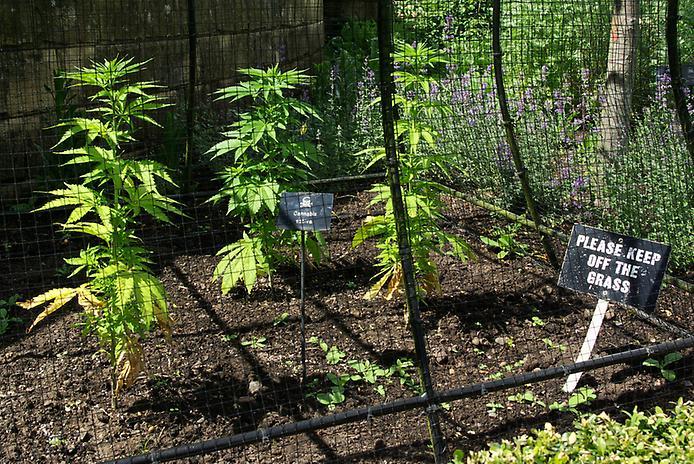 Сад отруйних рослин Альнвік (4)