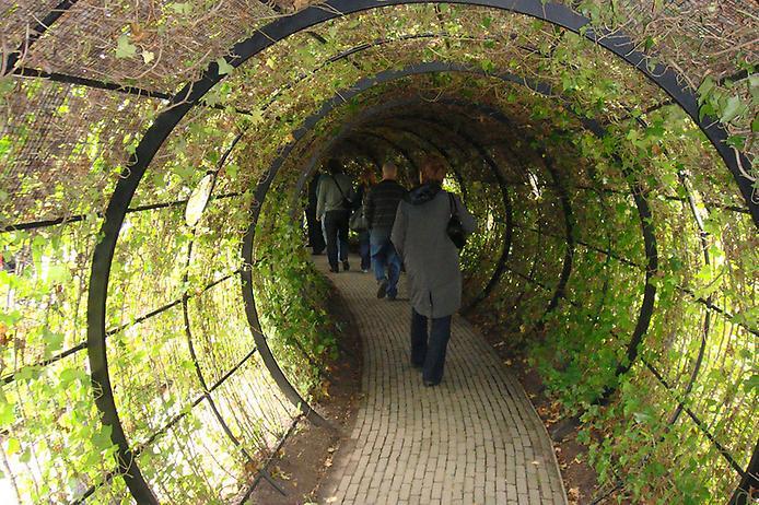 Сад отруйних рослин Альнвік (5)
