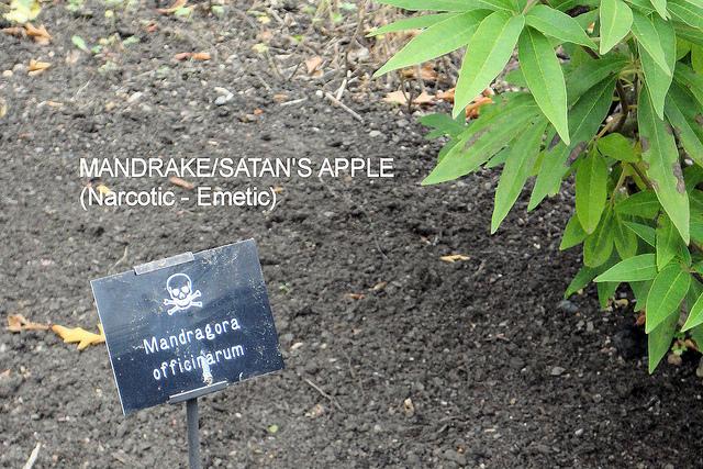 Сад отруйних рослин Альнвік (7)