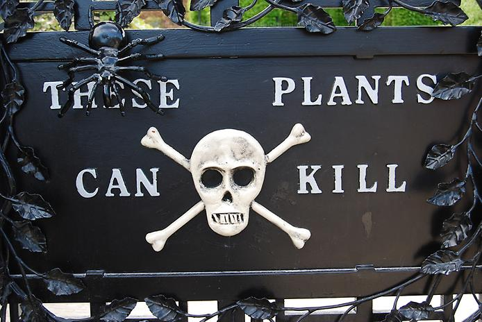 Сад отруйних рослин Альнвік (8)