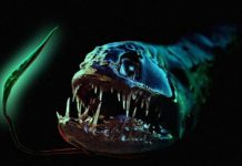 10 реальних морських істот з ваших кошмарів (10 фото) (1)