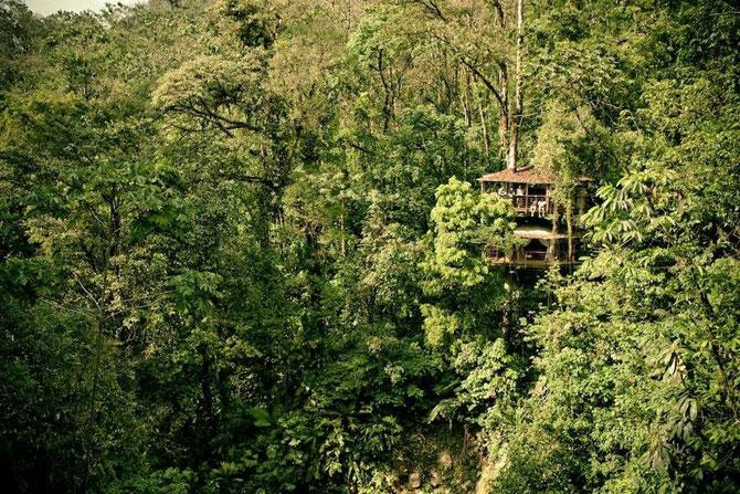 Дивовижне село з будинками на деревах (31 фото) (13)