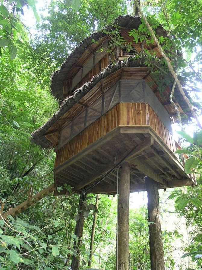 Дивовижне село з будинками на деревах (31 фото) (15)