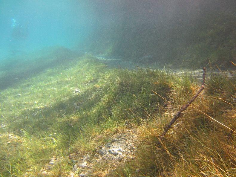 Грюнер Зее: Парк, який перетворюється на озеро (5)