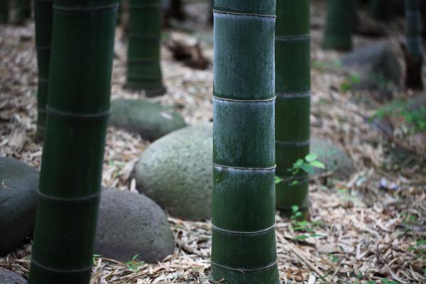 Красивий бамбуковий ліс Кіото (5)