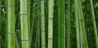 Красивий бамбуковий ліс Кіото (4)