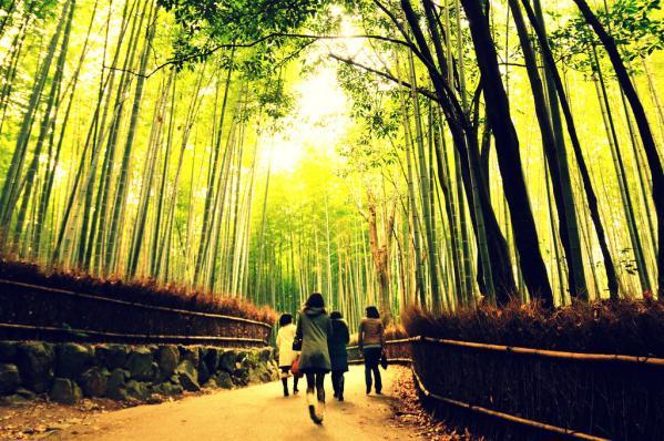 Красивий бамбуковий ліс Кіото (3)