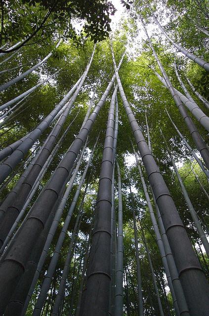 Красивий бамбуковий ліс Кіото (1)
