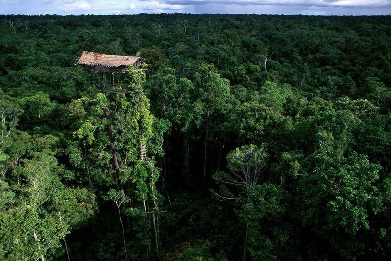 Плем'я Короваї та будинки на деревах в Папуа (1)