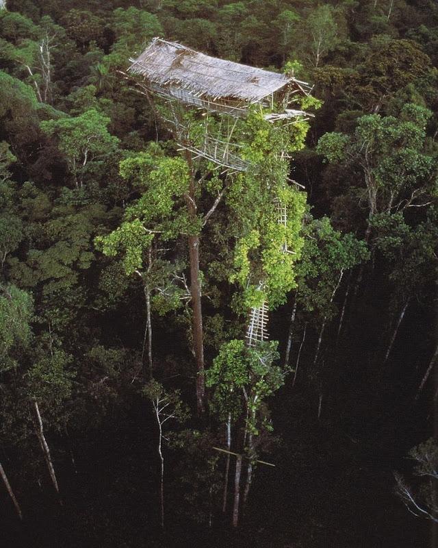 Плем'я Короваї та будинки на деревах в Папуа (2)