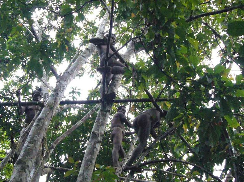 Плем'я Короваї та будинки на деревах в Папуа (3)
