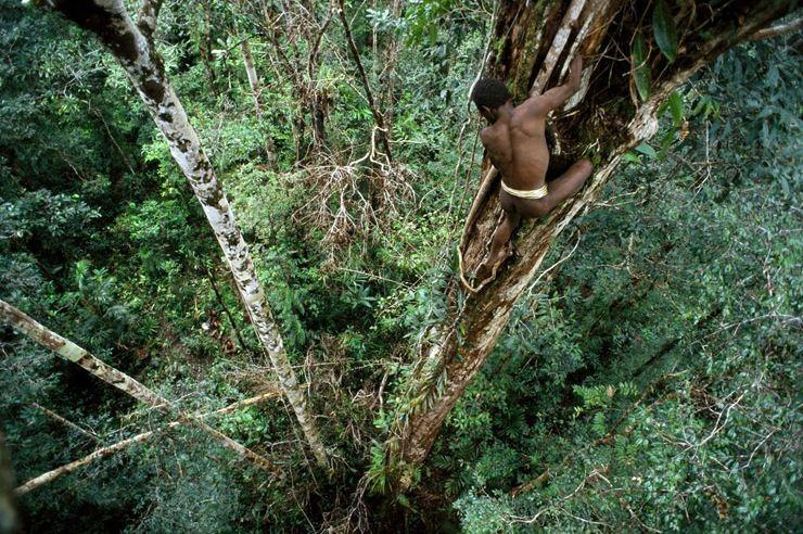 Плем'я Короваї та будинки на деревах в Папуа (4)
