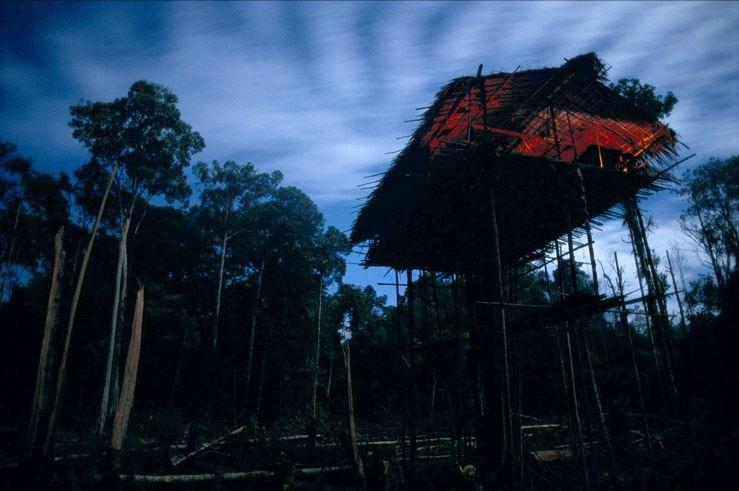 Плем'я Короваї та будинки на деревах в Папуа (5)