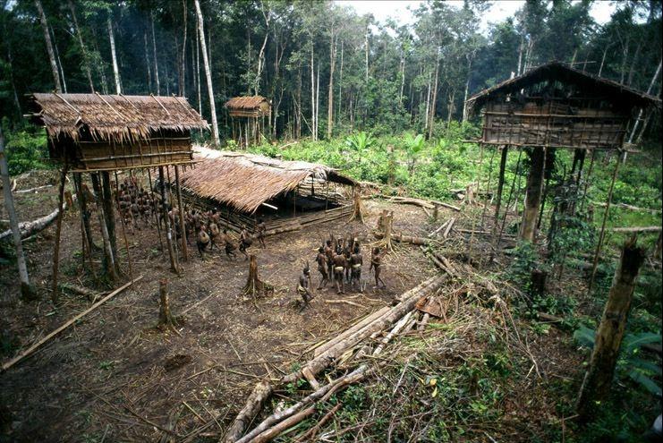 Плем'я Короваї та будинки на деревах в Папуа (8)