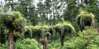 Перевернуті дерева льодовикових садів на Алясці (6)