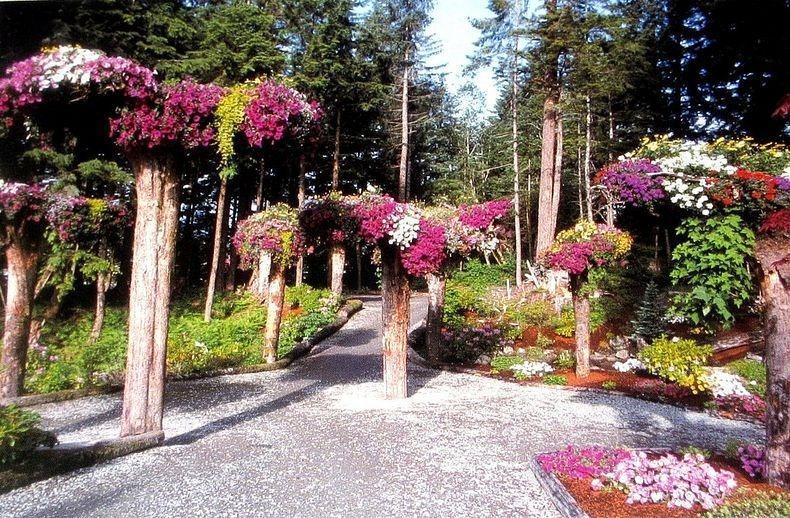 Перевернуті дерева льодовикових садів на Алясці (4)