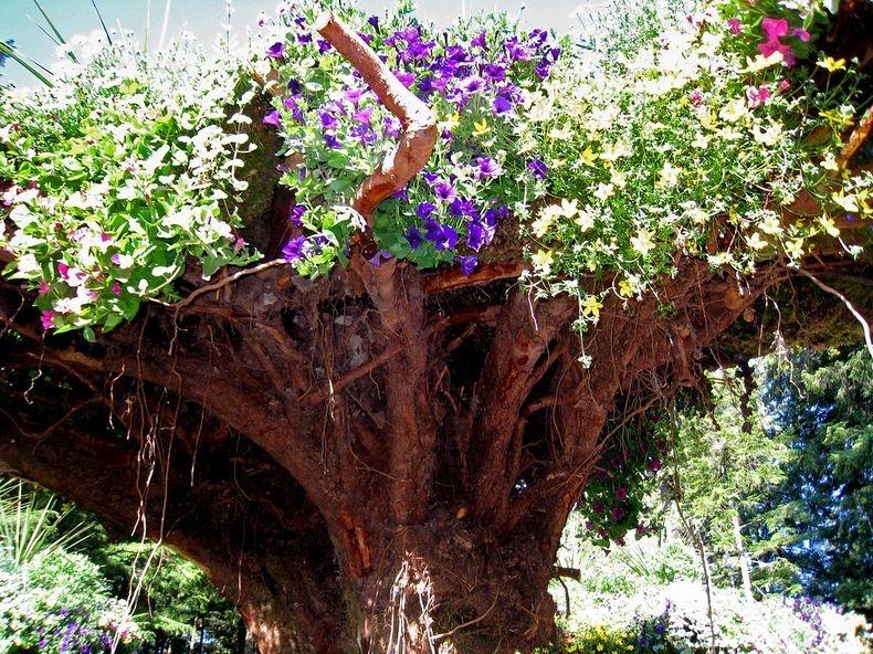 Перевернуті дерева льодовикових садів на Алясці (2)