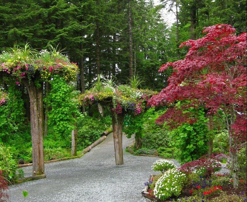 Перевернуті дерева льодовикових садів на Алясці (1)