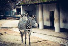 Найбільші зоопарки світу
