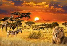 Кращі сафарі заповідники - вдома «великої п'ятірки»