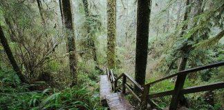 Національний парк Пасифік-Рим, Канада. (3)