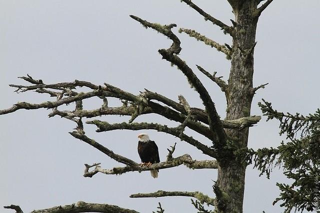 Національний парк Пасифік-Рим, Канада. (6)