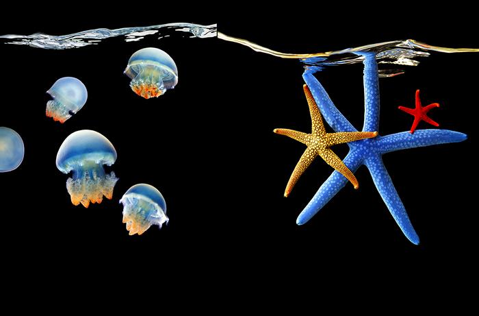 """Пишність підводного світу. Серія фотографій """"Sea"""" від Марка Лаїт (2)"""
