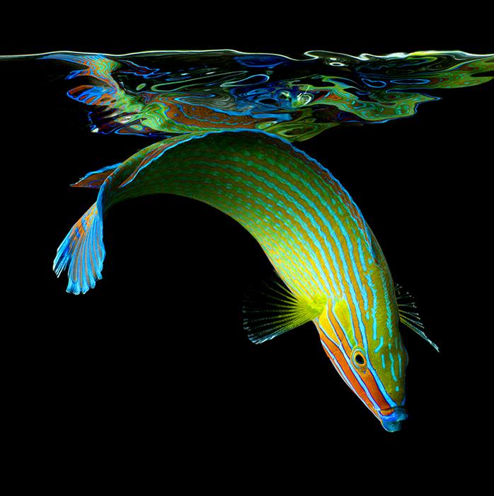 """Пишність підводного світу. Серія фотографій """"Sea"""" від Марка Лаїт (3)"""