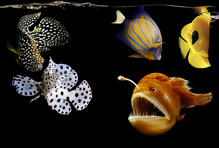 """Пишність підводного світу. Серія фотографій """"Sea"""" від Марка Лаїт (5)"""