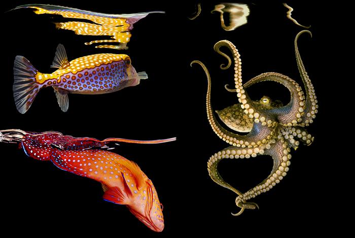 """Пишність підводного світу. Серія фотографій """"Sea"""" від Марка Лаїт (6)"""