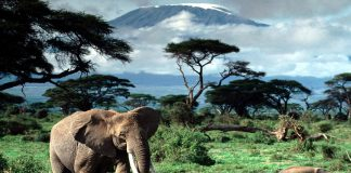 Визначні пам'ятки Танзанії