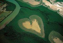 Мангровий ліс в Новій Каледонії.