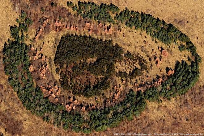 Ліс недалеко від Канзас-Сіті, США.